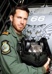 kitten-royal-navy-flight